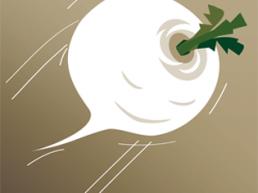 Christmas Snowball Turnip